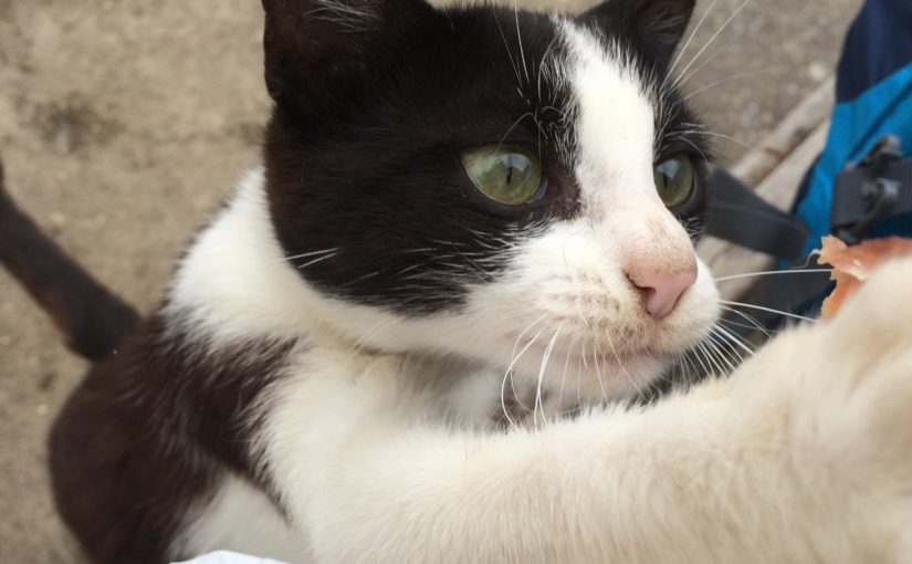 Prosciuttoa kissan kanssa